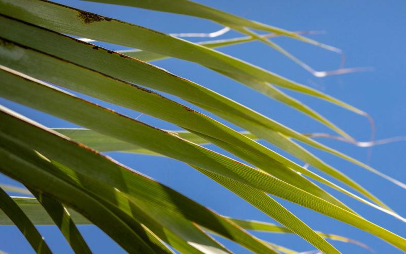 Palma Azzurra – Agritur Il Melograno Arco